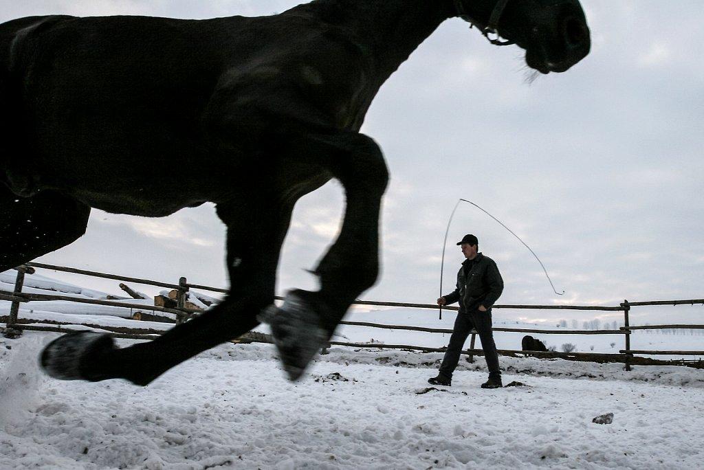 AT-Ill-horses-004.jpg